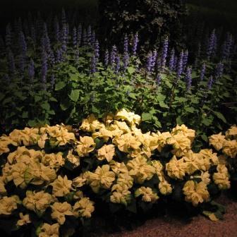 Longwood Gardens 12