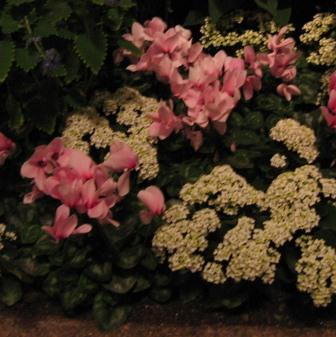 Longwood Gardens 18