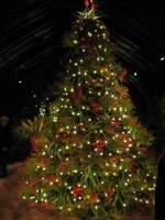 Longwood Gardens 6