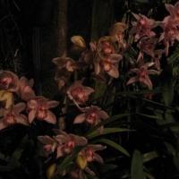 Longwood Gardens 14