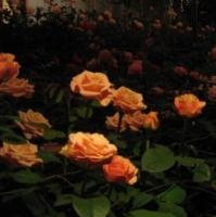 Longwood Gardens 16