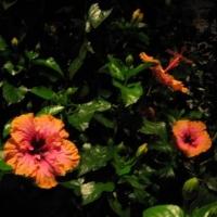Longwood Gardens 17